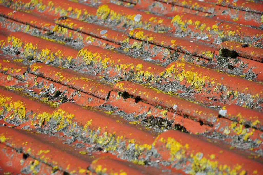 Roof Restoration - Mouldy Roof